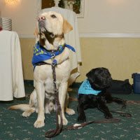 Service-Dogs-labs