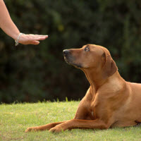 dog-obedience-training
